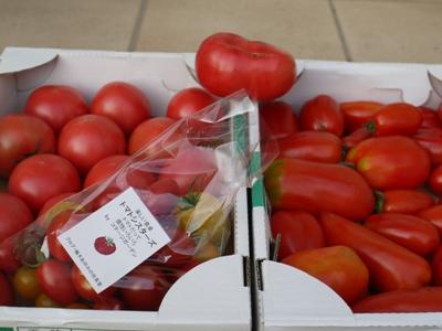 1022トマト