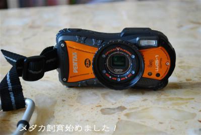 DSC_4485.jpg