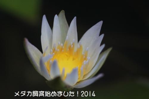IMG_1637_20141012210635005.jpg