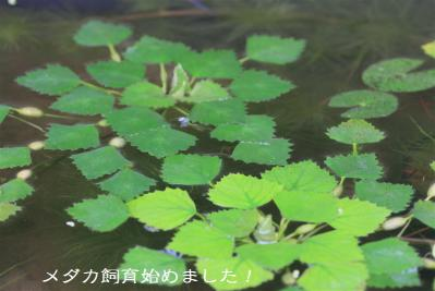 IMG_5827.jpg