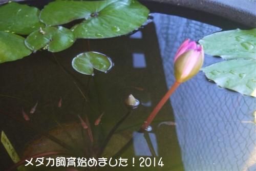 P1080856.jpg