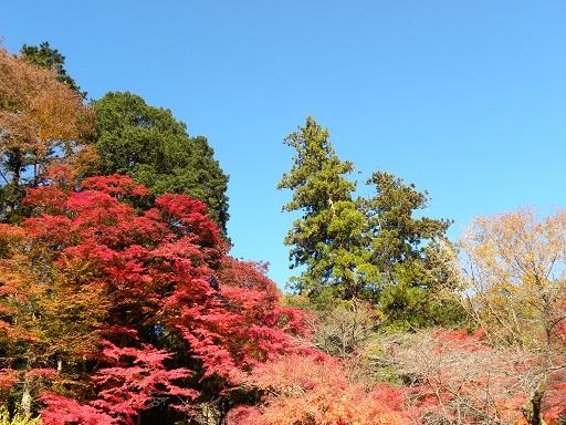 空染める 咲ける木の葉の 鮮やかさ