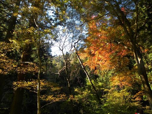 秋の息吹に 深山染まる