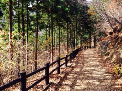 20141124hinohara_4_convert_20141124212913.jpg