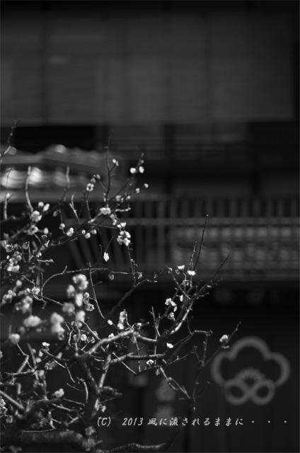 2013年3月 京都・祇園白川の風景3