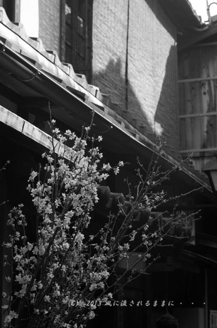 2013年3月 京都・祇園白川の風景5