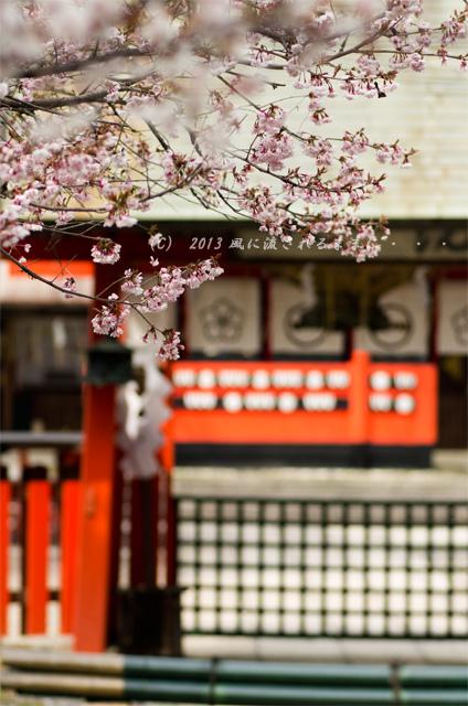 2013年 車折神社の桜7