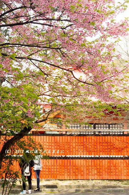 2013年 車折神社の桜10