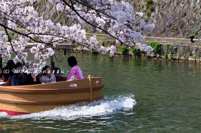 2013年 桜を探して・・・ 京都・岡崎疎水の桜1