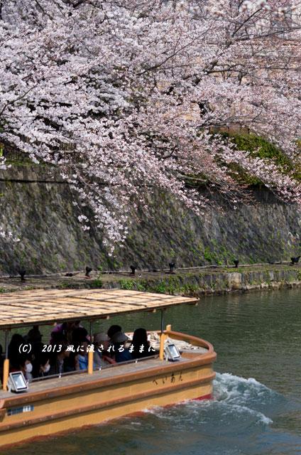2013年 桜を探して・・・ 京都・岡崎疎水の桜2