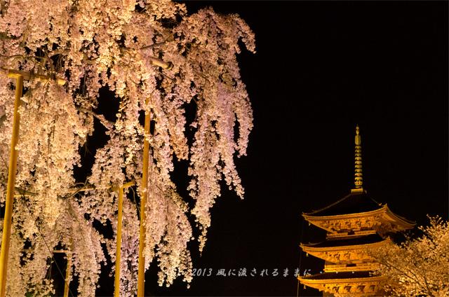 :2013年 桜を探して・・・ 京都・東寺 五重塔と不二桜1