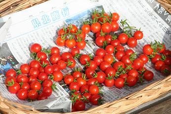 トマト 天日干し