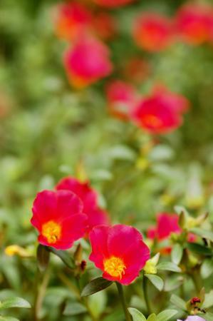 DSC00460三ッ池公園花畑