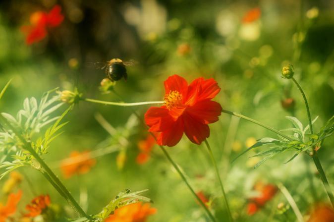DSC01484花に集う