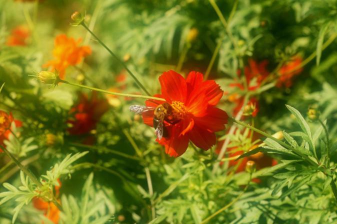 DSC01481花に集う