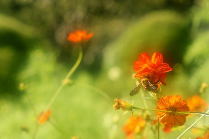 DSC01487花に集う