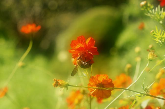 DSC01485花に集う