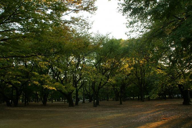 DSC02092木洩れ日