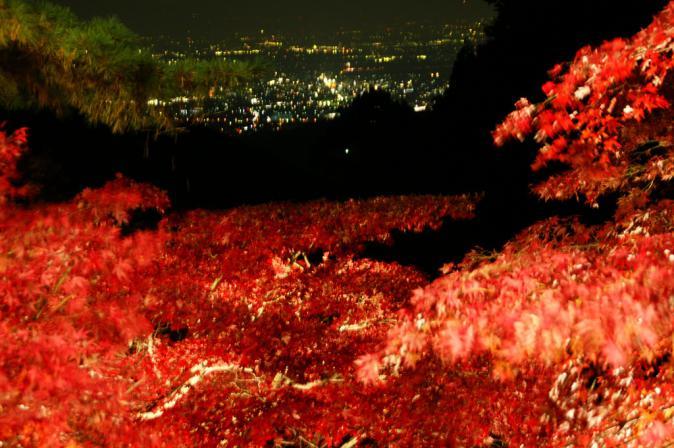 DSC03347大山紅葉絨毯
