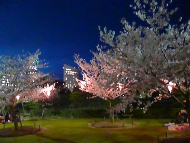 桜の馬場の桜