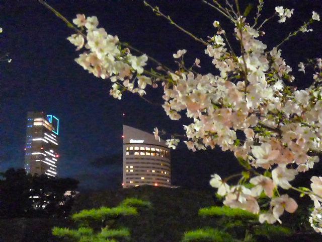 桜の馬場の桜とか
