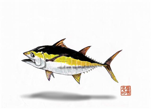 キハダ幼魚