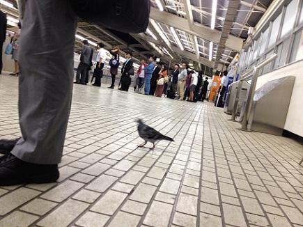 6202012新幹線熱海駅S0