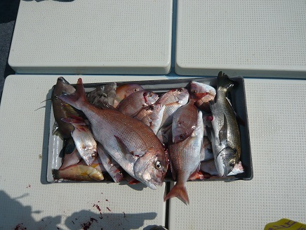 10112007天草鯛釣りS1