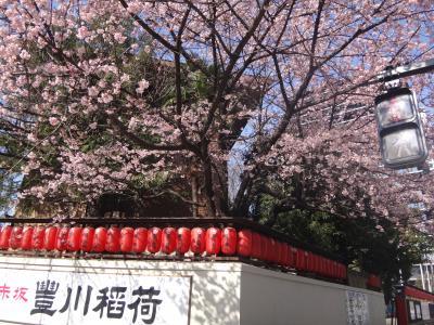 豊川稲荷の櫻