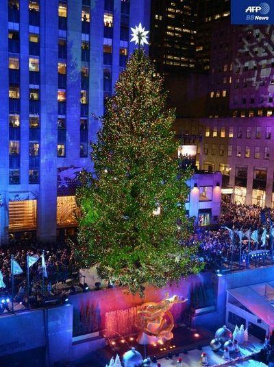 神戸ライフ:2012.11.29 現地11.28 21:00【NY巨大クリスマスツリー点灯】