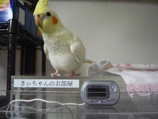 きーちゃん 006