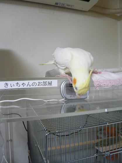 きーちゃん 004