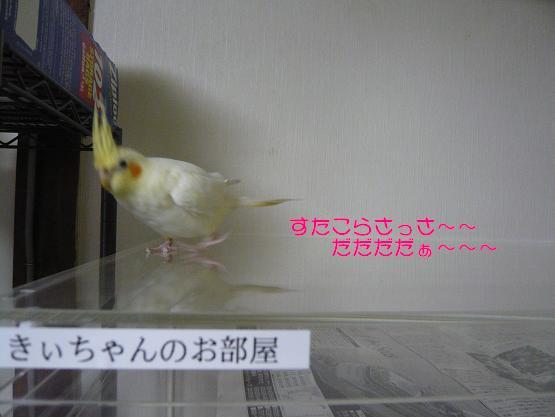 きーちゃん 002