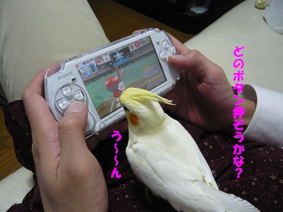 きーちゃん 001