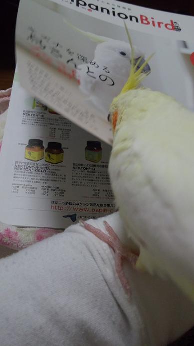 DCIM0330.jpg