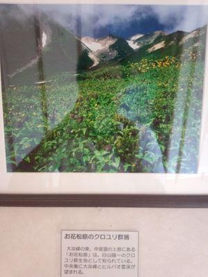お花松原の黒ユリ群落