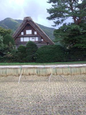 国重文 和田家 ハサ掛け風景