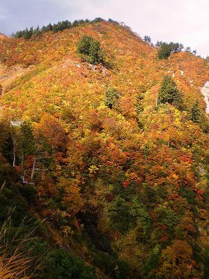 頂上駐車場の紅葉はだいぶ散りはじめてきてます!!