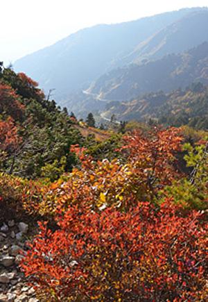 白山スーパー林道、紅葉見ごろ