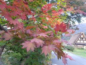 本覚寺 周辺 現在はもっと色づいています!!