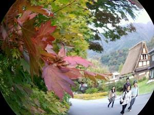 「おおた桜」で有名な本覚寺 周辺