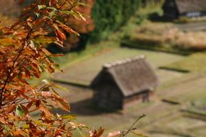 秋の合掌小屋~紅葉