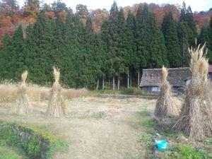 ニュウ 秋の風景