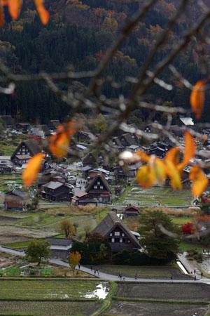 残り少しの木の葉&合掌集落