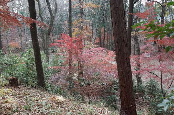 もみじ山2013-4