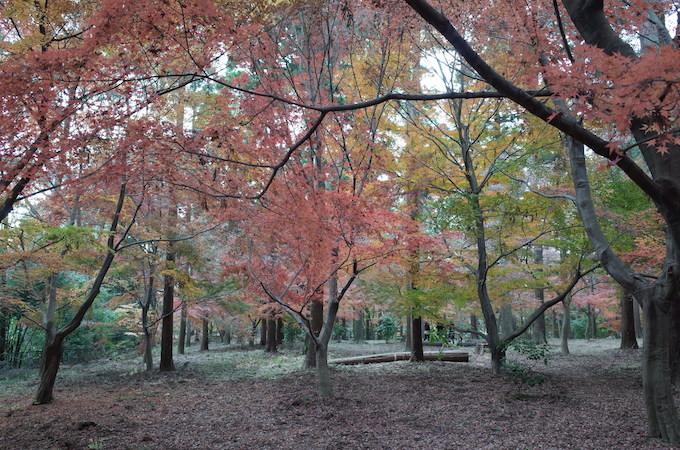 もみじ山2013-8jpg