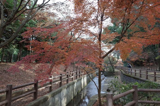 もみじ山2013-15