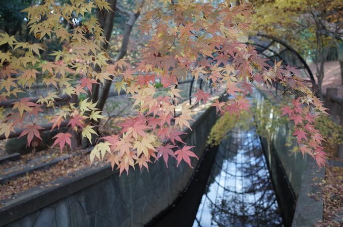 もみじ山2013-17
