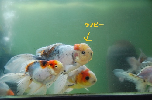 muchos pezes! 2