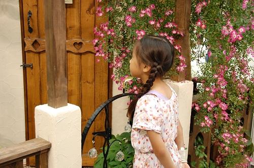 rosa en jardin 3